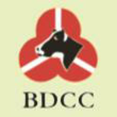 BDCC牌